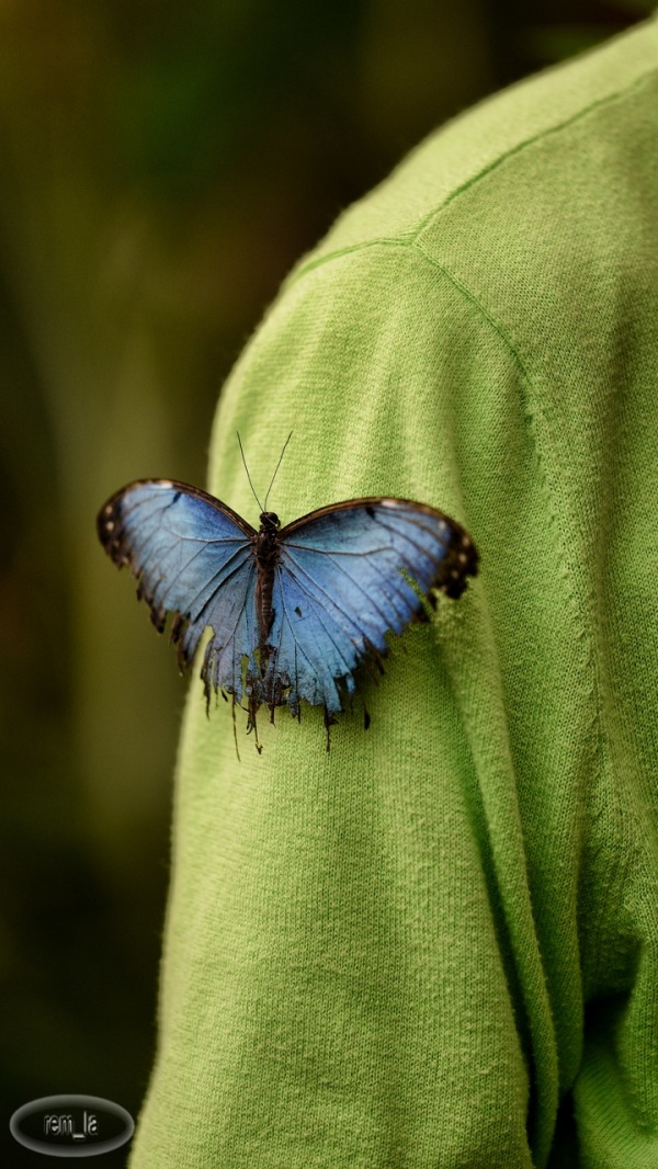 poullain,papillon,jardinerie