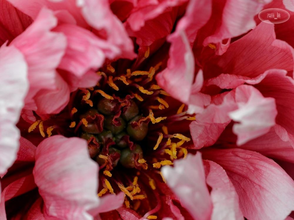 fleur,vincennes,parc