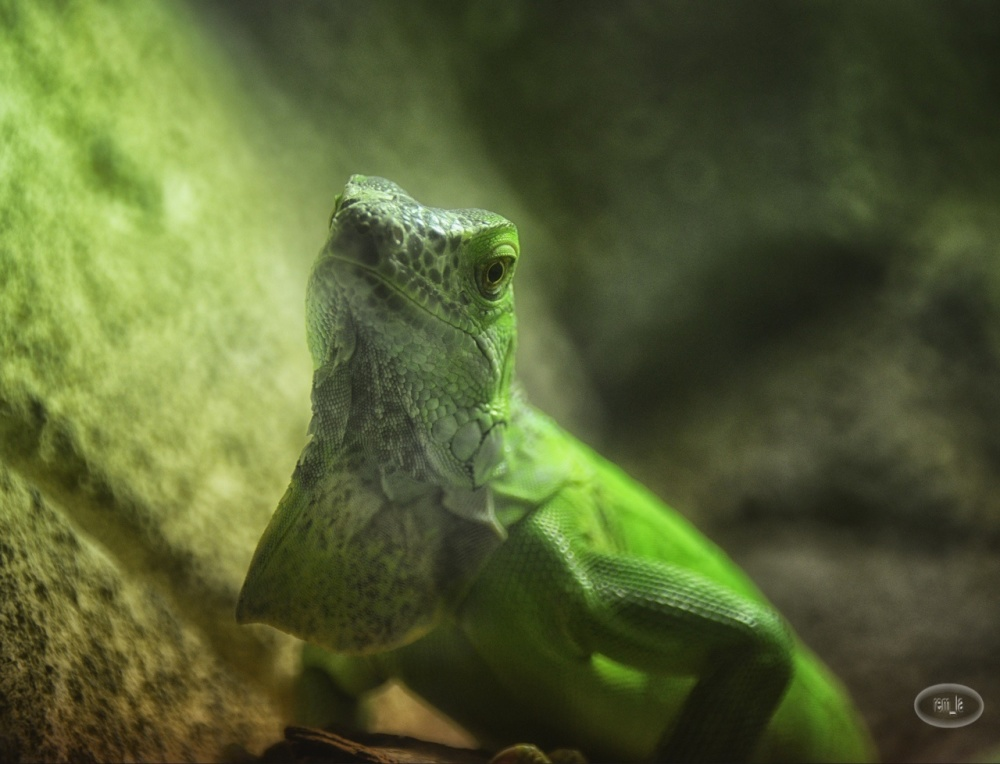 zoo,beauval,animal,reptile