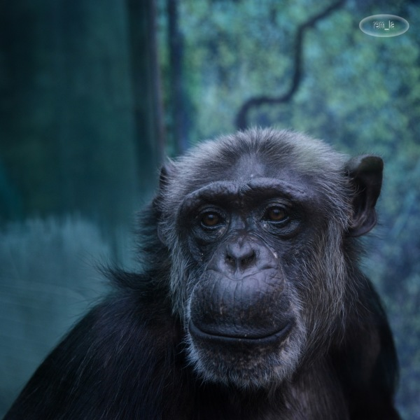zoo,beauval,animal,singe