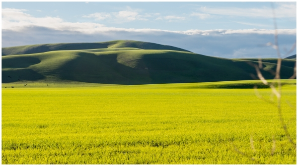 Springtime Hills Livermore California