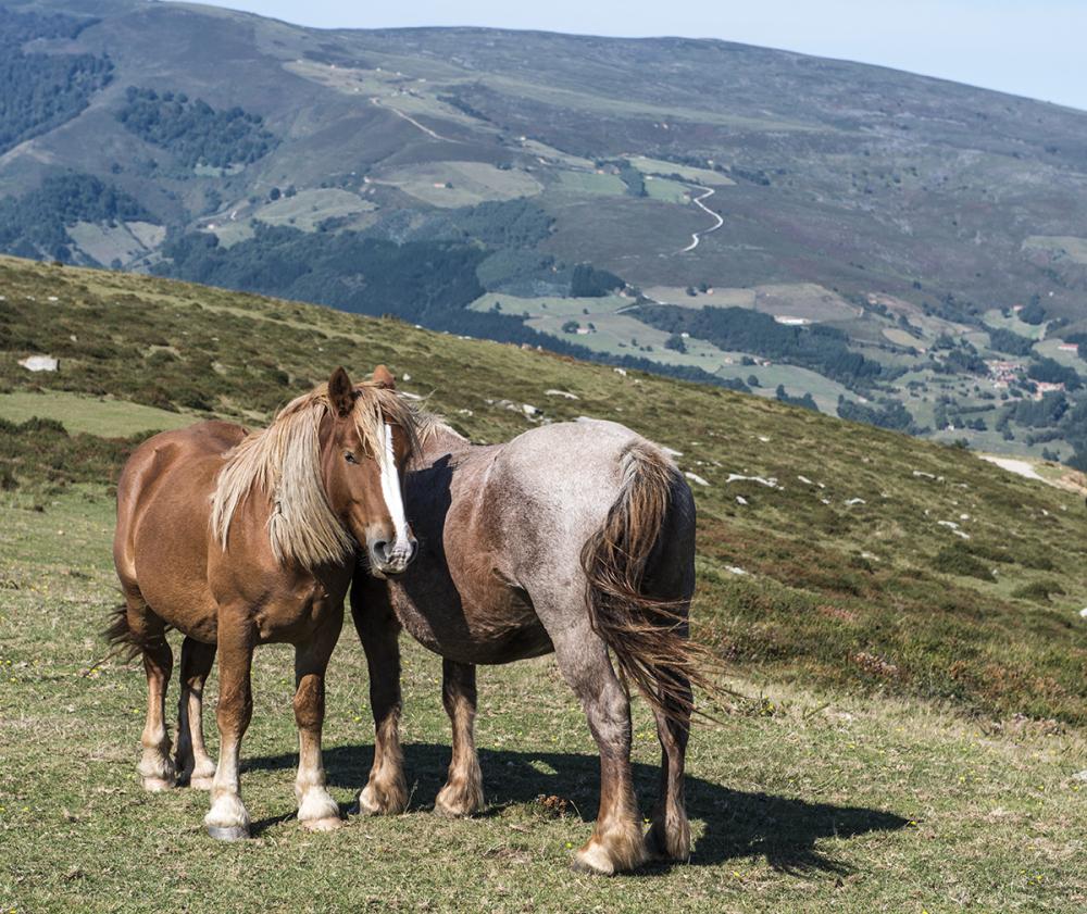 Cantabria Hills Spain