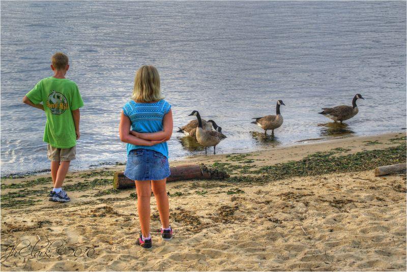 canada-geese rumson-nj navasink-river