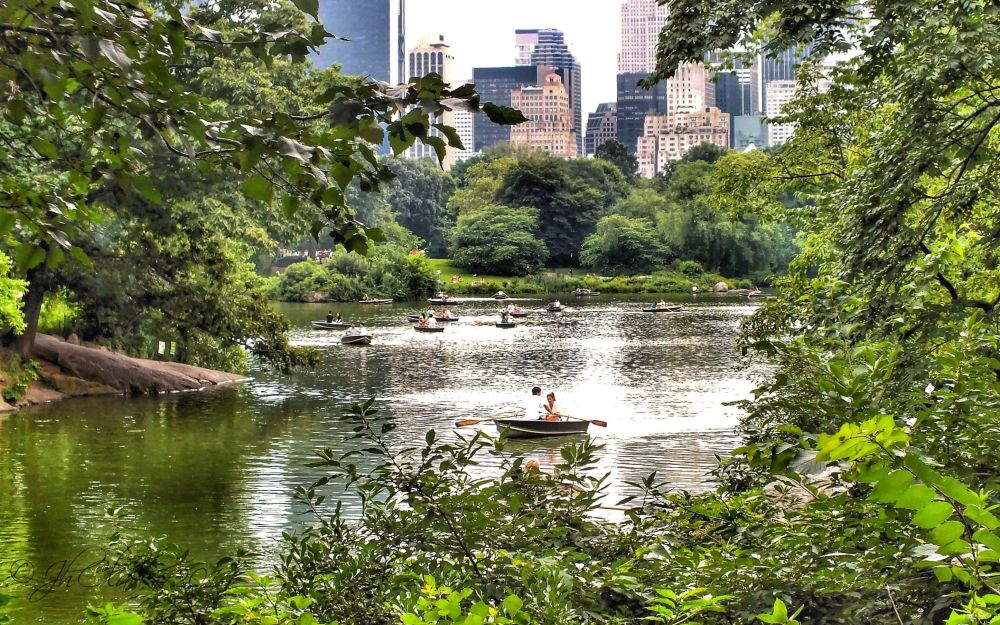 Rowing in Central Park...