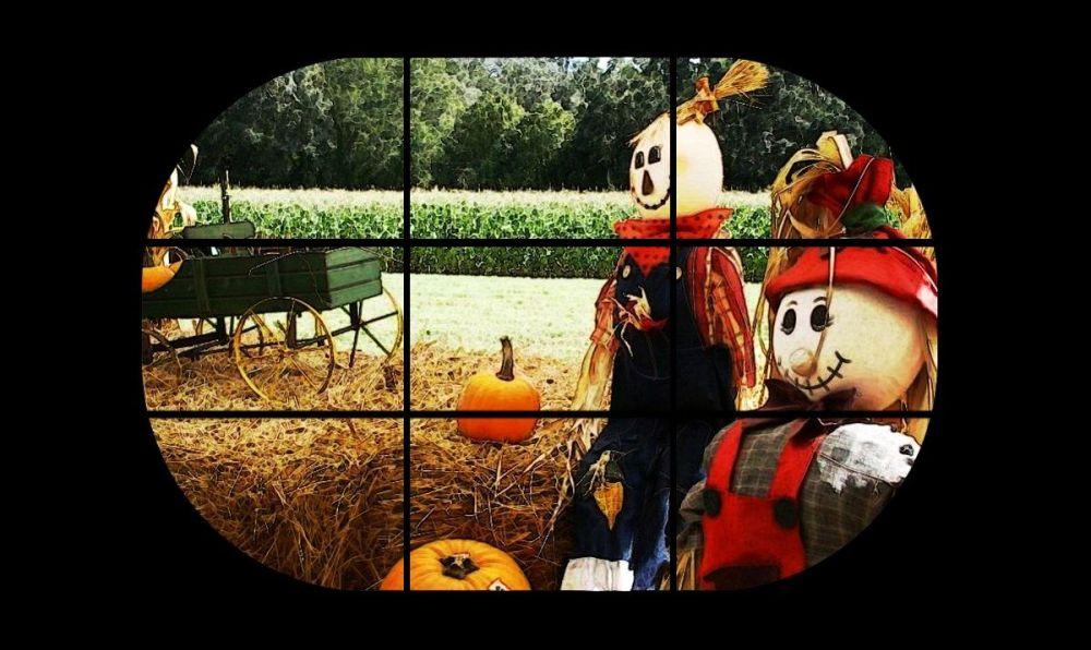 Autumn thru an oval window...