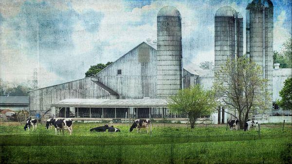 Amish Barn...