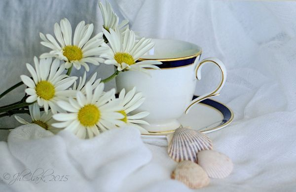 Another teacup...