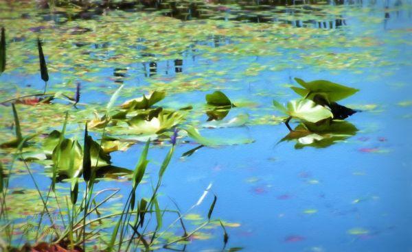 Lake Lindsey watercolor...
