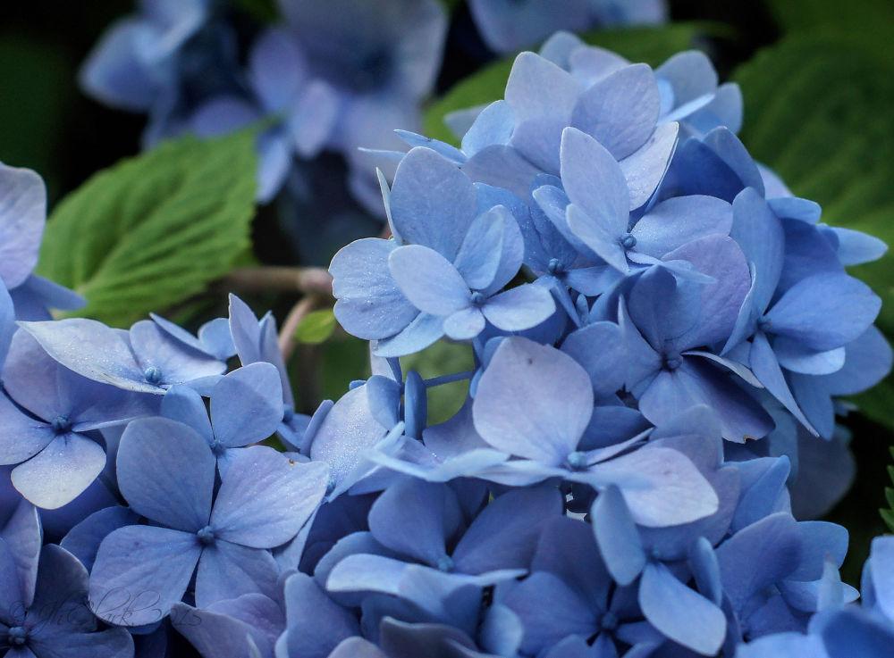 Beautiful in blue...