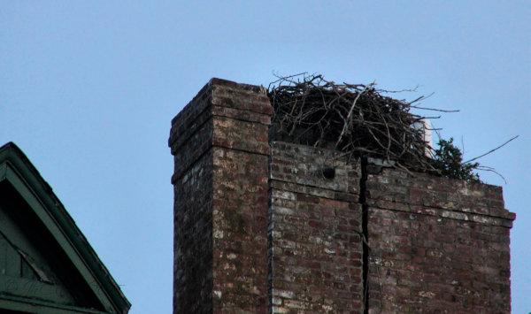 Osprey nest, Sandy Hook N J...