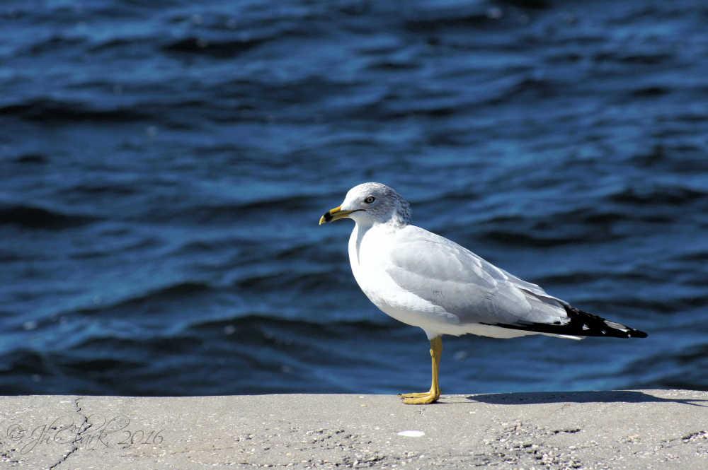 Local bird...