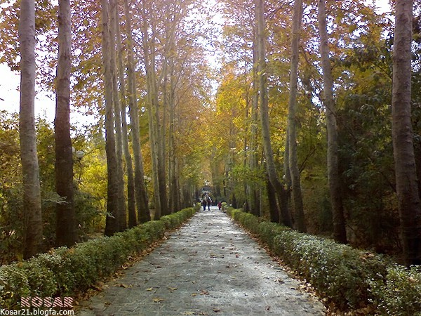 Autumn tree  درخت پاييز جمشيديه