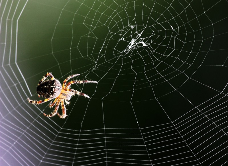 le web Master