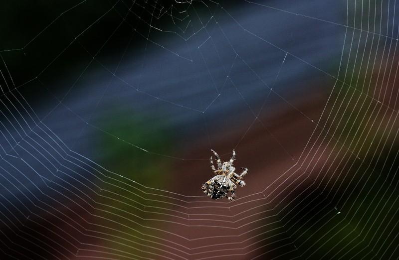 Dentellière web