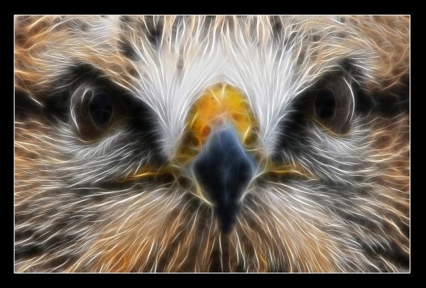 Falcon spirit