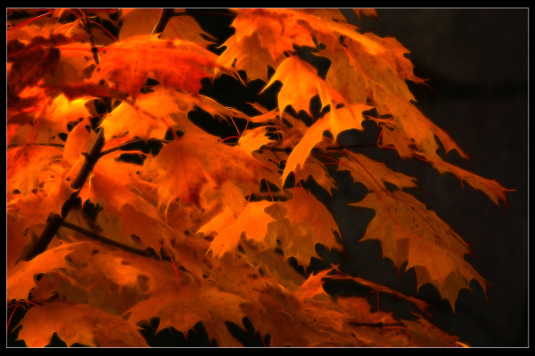 Couleurs d'automne II