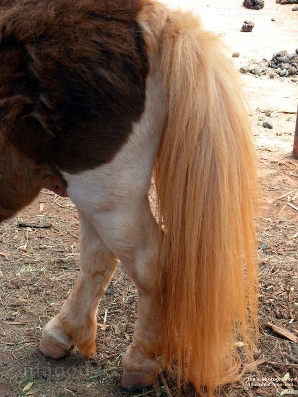 Closeup of orange donkey tail