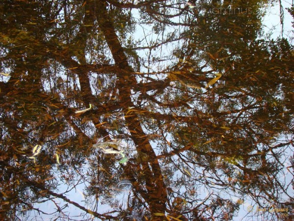 Autumn leaves reflection