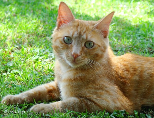 ginger cat green eyes