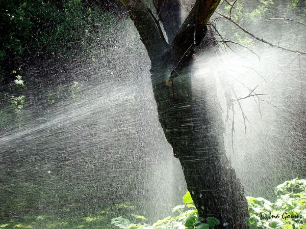 Watersprayer splashing tree