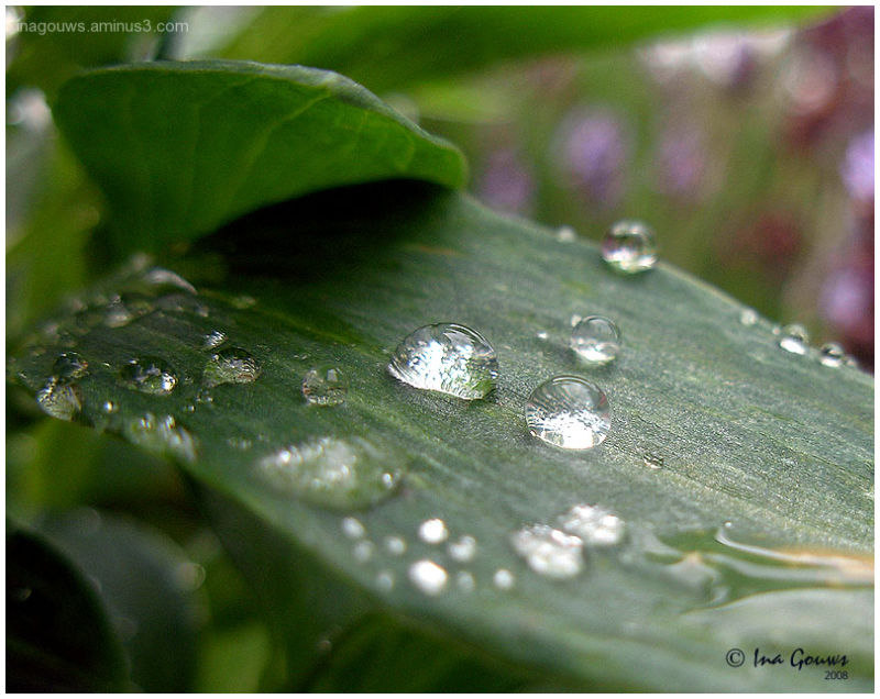 Raindrops of green leave