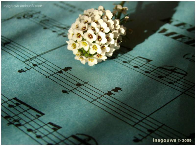 A flower on a music sheet