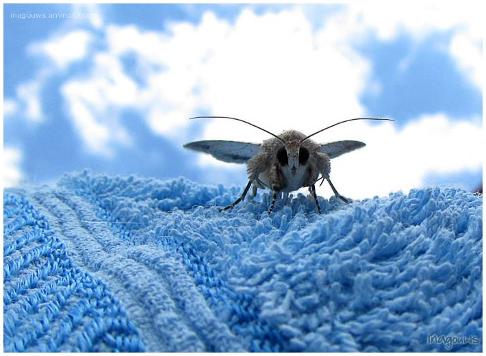 moth on towel