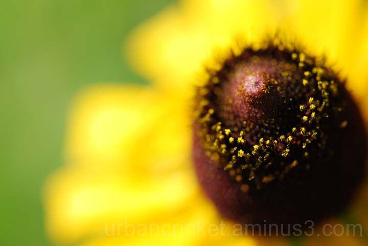 Pollen Head