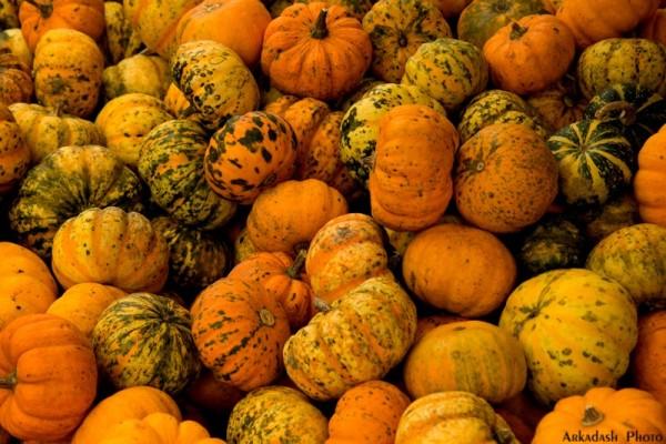 Pumpkin Festival (5/5)