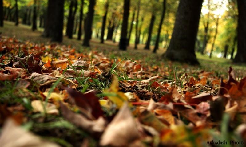 Remembering Fall #1