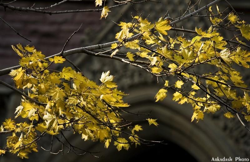 Remembering Fall #5