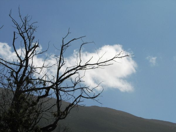 tree near mauna kea state park