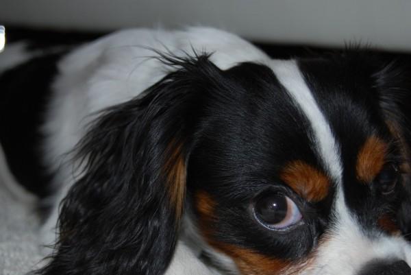 Dogs eye view