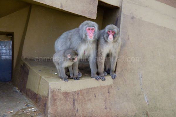 Monkey family in Amsterdam's zoo