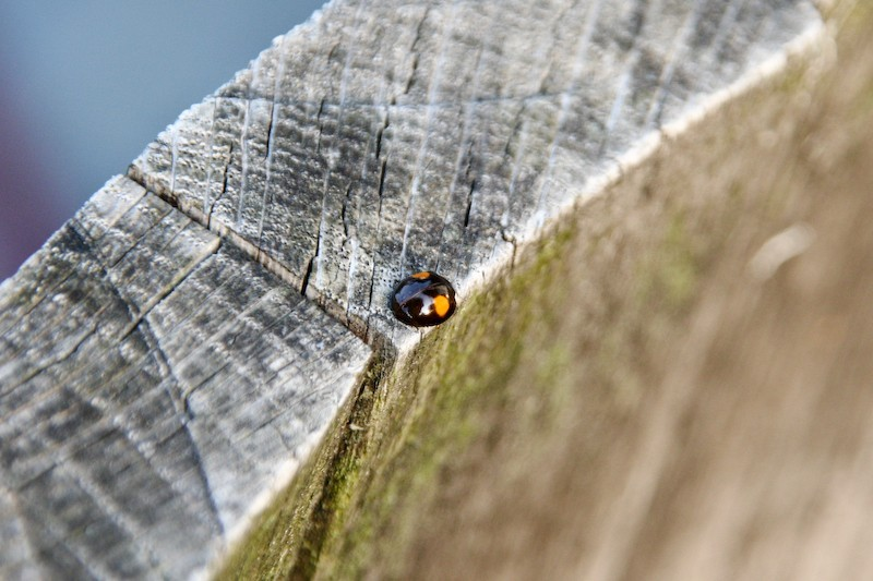 A ladybug at the edge of the abyss
