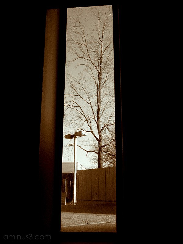 tree street light lamp window inside