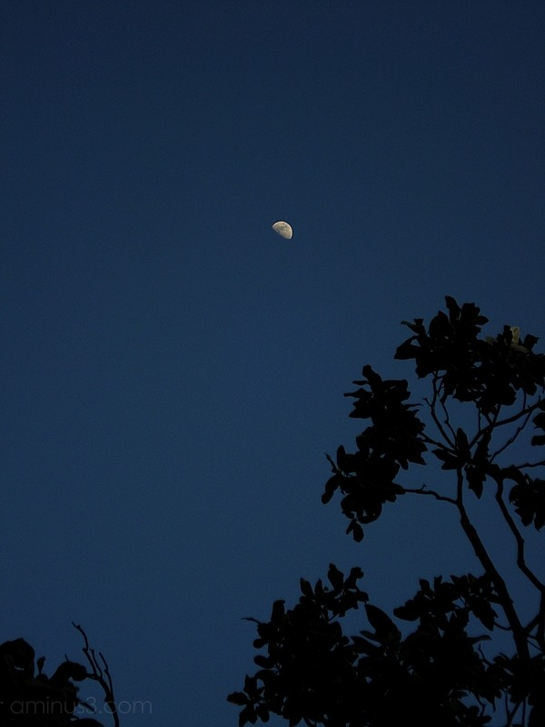 tree leaves silhouette moon