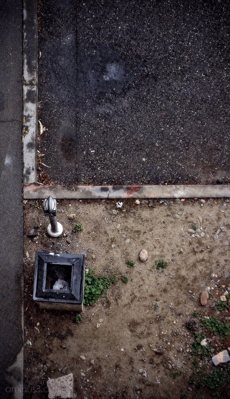 parking lot meter trash can