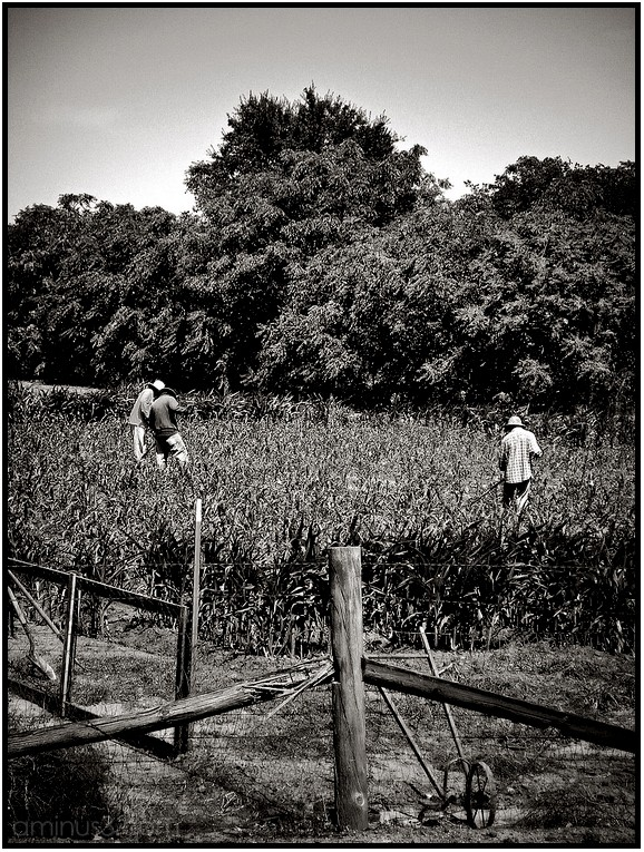 agriculture workers farmers field
