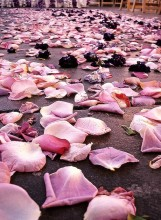 untitled flower petals at wedding