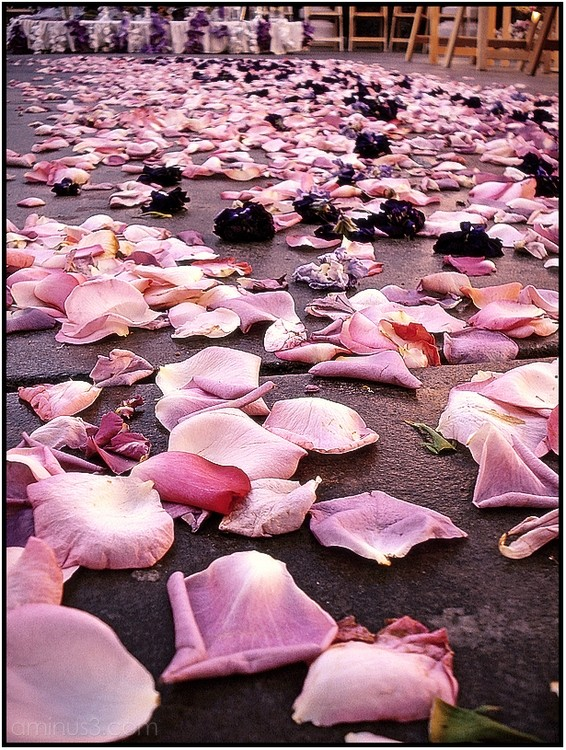 flower petals macro wedding