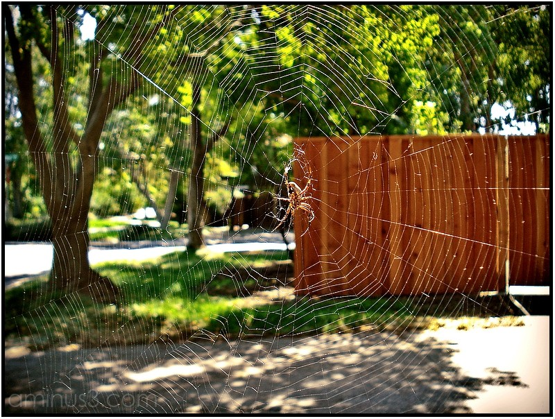 spider web spiderweb
