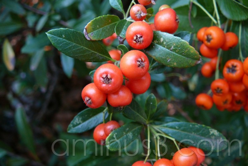 Berry Nice ...