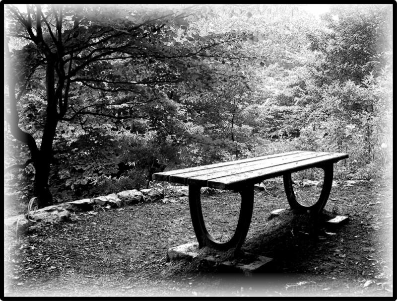Wood inside Shikinomori, Kanagawa Prefecture