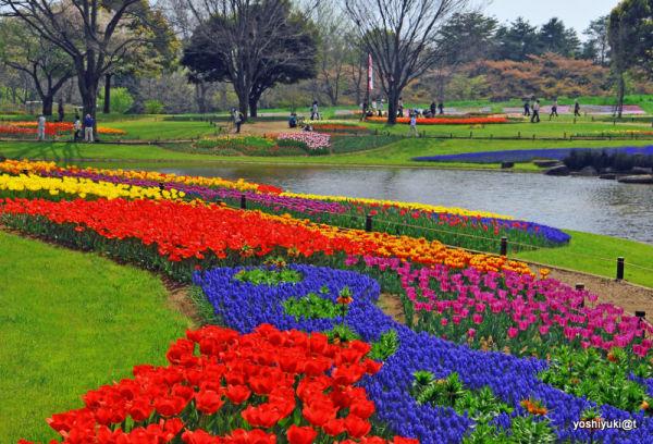 The Magic Garden,Showa Memorial Park