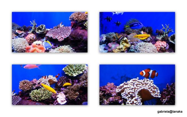Tanks with tropical fish at acquarium,Asamushi