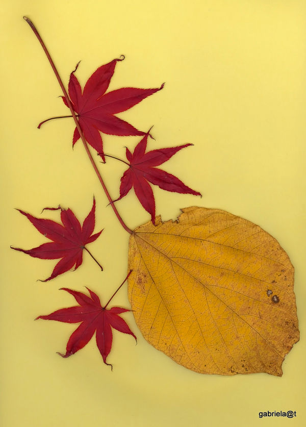 Artistic leaves of autumn
