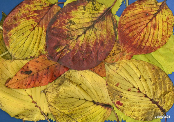 Leaves used to create artistic patterns