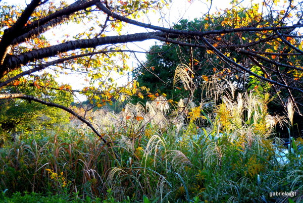 Autumn set in - late afternoon lunlight