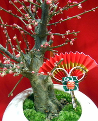 Bonsai for celebration...